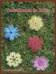 Variationen in Blüte